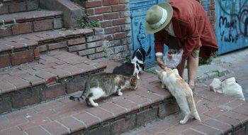 Kedili Kadın'ın Kedi Evleri Projesi'ne Belediyeden Tam Destek