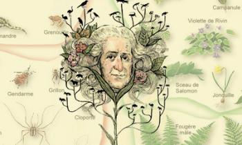 Tanrı Yarattı ve Linnaeus Sınıflandırdı: Carl Linnaeus
