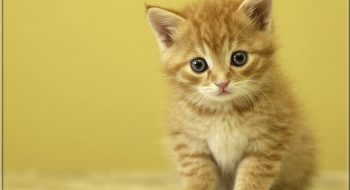 Tekir Kedilerin Gerçek Yüzü