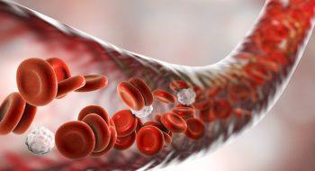 Bize Hayat Veren Kırmızı Sıvı: Kan