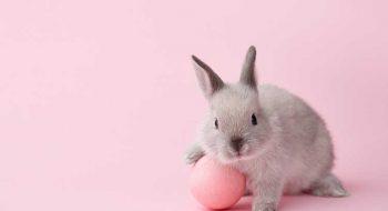 Hayvanlar Üzerinde Deney Yapmayan Vegan Markalar
