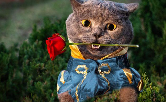 Kediler ile İnsanlar Arasında Benzer Olan 10 Davranış